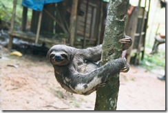 sloth_sinchucuy_amazon_lodge_peru_feb_2002